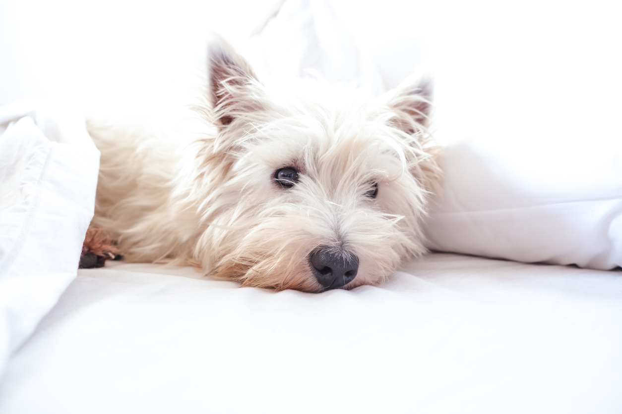 Dog Friendly Hotels Carlsbad